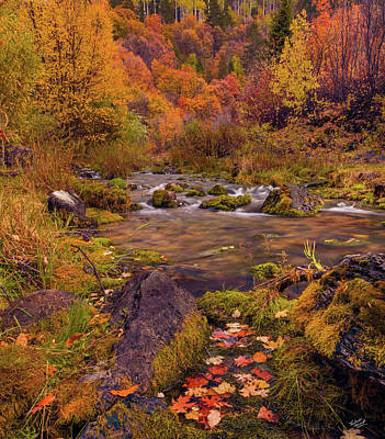 Photograph - Cub River Autumn by Leland D Howard