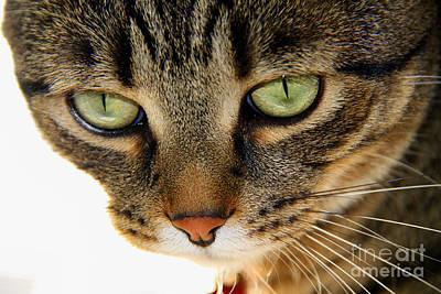 Photograph - Inquisitive Cat by Jolanta Anna Karolska