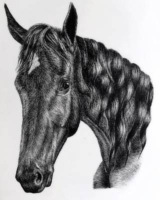 Custom Pet Portrait Drawing - Custom Portrait Horse by Emma Holliday