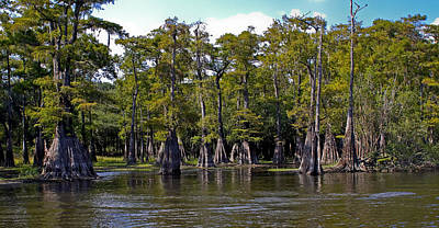 Cypress On The Suwannee Art Print