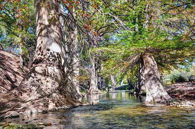 Photograph - Cypress by Savannah Gibbs
