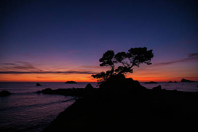 Photograph - Cypress Sunset by Constance Reid