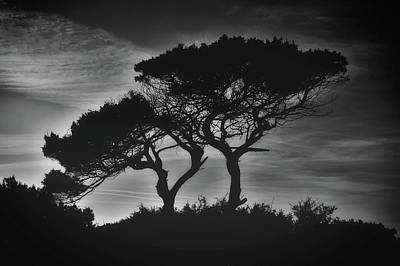 Photograph - Cypress Sunset by Dimitris Vetsikas