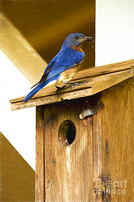 Photograph - Daddy Bluebird With A Bug by Kay Brewer