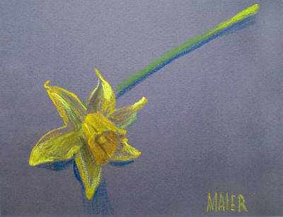 Drawing - Daffodil by Donald Maier