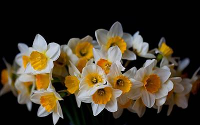 Floral Digital Art - Daffodil by Maye Loeser