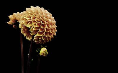 Photograph - Dahlia by Alexas Fotos