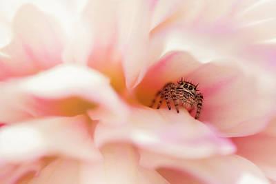 Photograph - Dahlia Cafe by Erica Kinsella