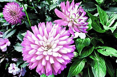 Floral Digital Art - Dahlia by Cesar Vieira