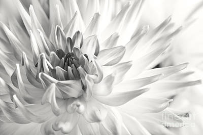 Warm Color Photograph - Dahlia by Nailia Schwarz
