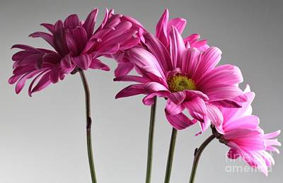 Daisey Bouquet Art Print