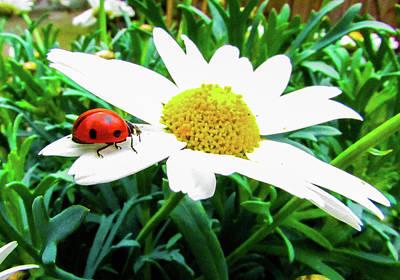 Daisies Photograph - Daisy Flower And Ladybug by Cesar Vieira