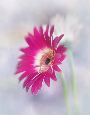 Photograph - Daisy Petals by David and Carol Kelly