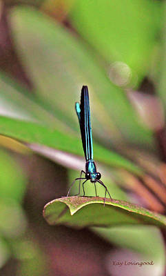 Photograph - Damselfly by Kay Lovingood