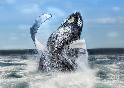Photograph - Dances With Whales by Nancy Dempsey
