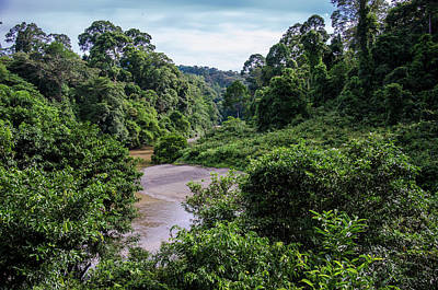 Danum Valley Conservation Area Photograph - Danum Valley by Richard Parsons
