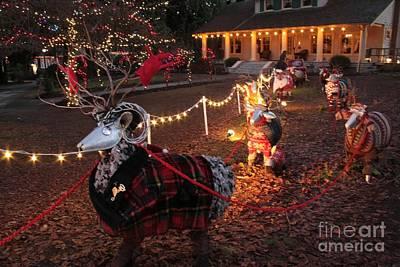 Photograph - Dapper Reindeer by Frank Townsley