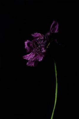 Photograph - Dark Matter by Angela King-Jones