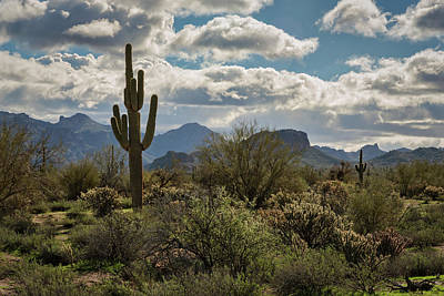 Photograph - Blues Skies And Puffy White Clouds In The Desert  by Saija Lehtonen