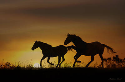 Horse Photograph - Daybreak by Stephanie Laird