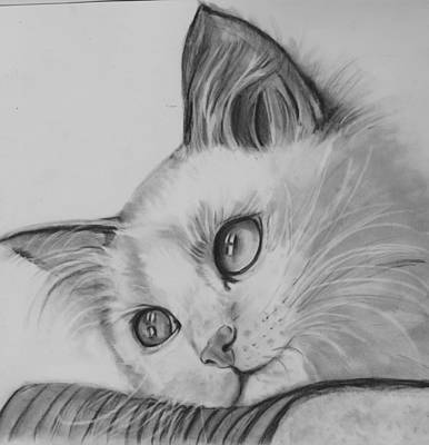 Drawing - Daydreaming Kitty by Barb Baker
