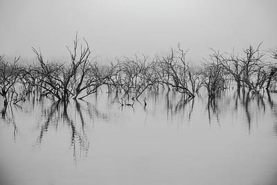 Photograph - Dead Lake Reflections by Ryan Heffron