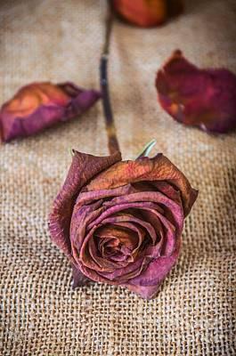 Sadness Photograph - Dead Rose by Carlos Caetano