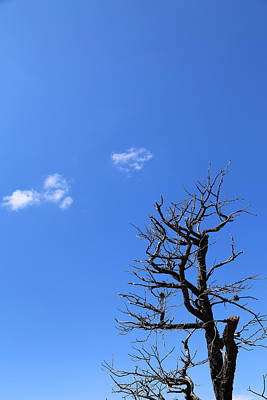 Photograph - Dead Tree And Two Clouds by Mary Bedy
