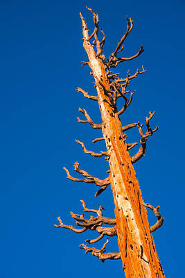 Photograph - Dead Tree by Celso Diniz