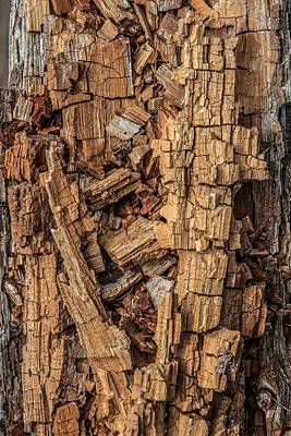 Photograph - Dead Tree by Christopher Perez