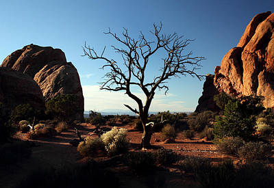 Photograph - Dead Tree In Arches National Park by Pierre Leclerc Photography