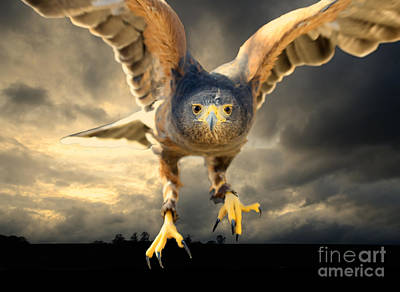 Flying Hawks Digital Art - Death Comes On Silent Wings by Nigel Bangert