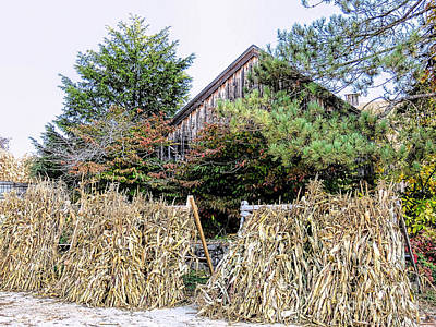 Photograph - Decorative Corn Stalks  by Janice Drew