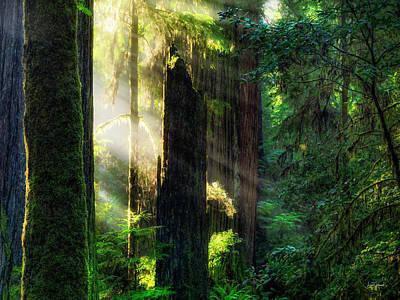 Photograph - Deep Forest Light by Leland D Howard