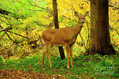 Photograph - Deer In Fall Colors by David Arment