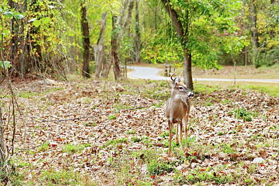 Photograph - Deer Me, Are You In My Space? by Simply Photos