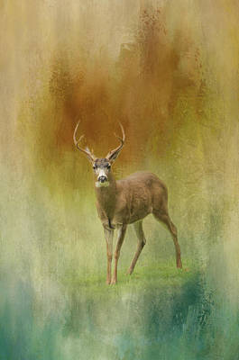 Photograph - Winter Deer by Marilyn Wilson