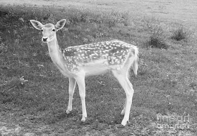Portrait Photograph - Deer by Venus