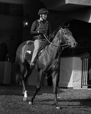 Photograph - Del Mar Paddock by Dusty Wynne