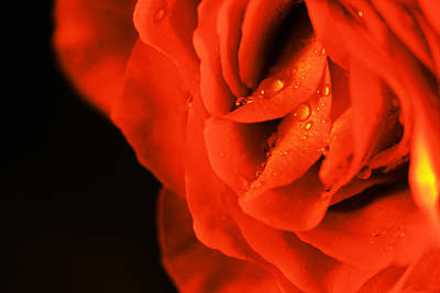 Photograph - Delicate Beauty by Jeff Swan