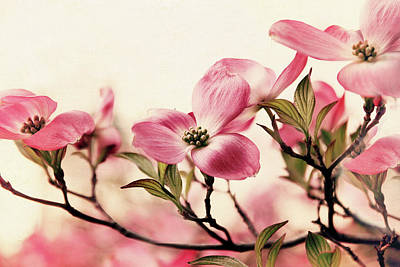 Print featuring the photograph Delicate Dogwood by Jessica Jenney