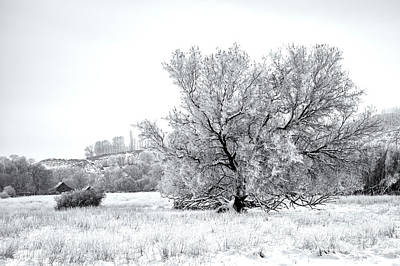 Photograph - Delicate Winter by Mike Dawson