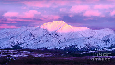 Photograph - Denali - Alpenglow 5 by Mary Carol Story