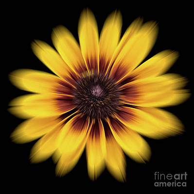 Photograph - Denver Daisy by Ann Jacobson