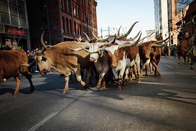 Digital Art - Denver National Western Stock Show Kick-of Parade 2018  by Lena  Owens OLena Art