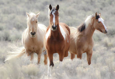 Photograph - Desert Angels II by Athena Mckinzie