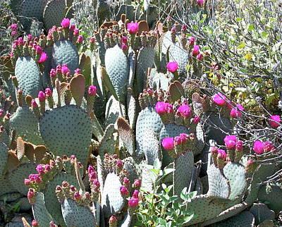 Photograph - Desert Bloom by Pamela Walrath