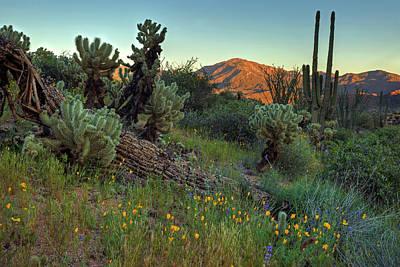 Photograph - Desert Dusk by Sue Cullumber