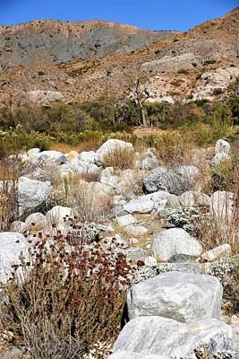 Photograph - Desert Landscape by Lisa Dunn