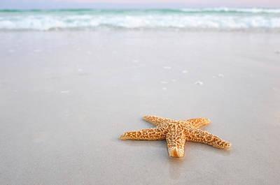 Robert Bellomy Royalty-Free and Rights-Managed Images - Destin Florida Miramar Beach Starfish by Robert Bellomy